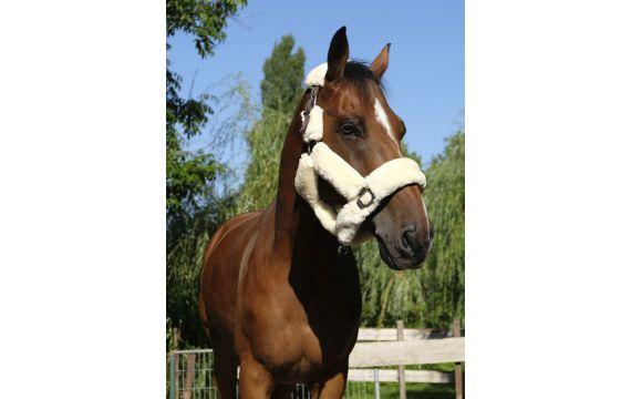Chemise Dobby Harry s horse