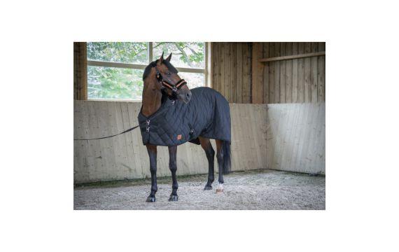 Protege boulet en cuir Hickstead Harry s horse